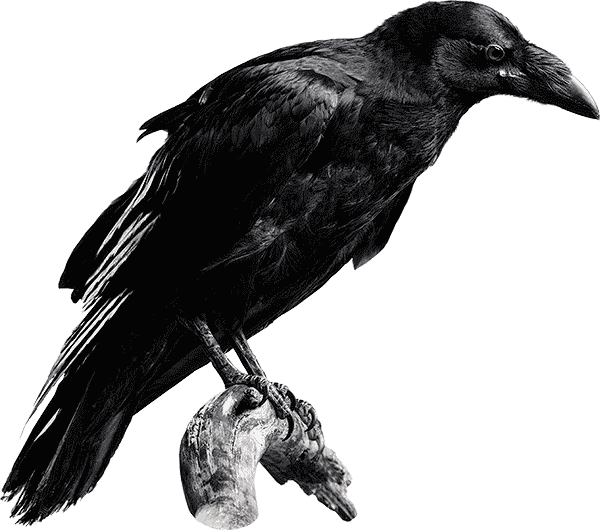cutout-alderley-crow