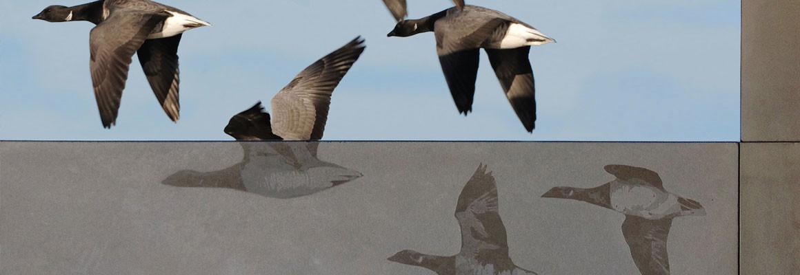 WOWL-Slider-geese